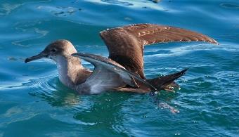 Un 13% de las aves del mundo está en peligro de extinción