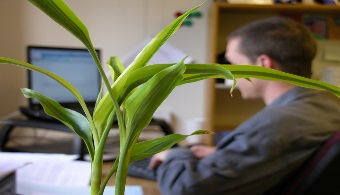 Tener plantas en la oficina aumenta la productividad
