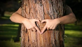 <p style=text-align: justify;>Entregar el<strong> control de los bosques a las comunidades locales</strong> podría ser una estrategia adecuada para <strong>reducir la extinción de especies y prevenir el cambio climático</strong>, concluye un reciente estudio del <a href=https://www.wri.org/ target=_blank><strong>Instituto de Recursos Mundiales</strong></a> (IRM). Contrario a los que muchos pueden pensar, los pobladores de los bosques han demostrado ser los mejores guardianes de su hábitat natural: las tierras bajo su protección presentan menores tasas de deforestación y de emisiones de carbono.</p><p style=text-align: justify;></p><p><strong>Lee también</strong><br/><a style=color: #ff0000; text-decoration: none; title=Estancamiento atmosférico amenaza al Amazonas href=https://noticias.universia.edu.pe/ciencia-nn-tt/noticia/2014/06/27/1099674/estancamiento-atmosferico-amenaza-amazonas.html>» <strong>Estancamiento atmosférico amenaza al Amazonas</strong></a></p><p style=text-align: justify;></p><p style=text-align: justify;><br/>Sin embargo, solo la <strong>octava parte de los bosques</strong> del mundo <strong>se encuentran bajo la tutela de las comunidades indígenas</strong>, en tanto la enorme mayoría de estas regiones son controladas por los gobiernos o están arrendadas para la tala y la minería. Solo en el Perú la minería ilegal genera más de 2.900 millones de dólares al año.</p><p style=text-align: justify;></p><h4 style=text-align: justify;>Guardianes de la naturaleza</h4><p style=text-align: justify;>La investigación del IRM recogió información de <strong>estudios hechos en 14 países de África, Asia y América Latina</strong>. Una de sus conclusiones indica que la tasa de deforestación en las comunidades indígenas de la Amazonía brasileña fue menos del uno por ciento entre 2000 y 2012, mientras que fuera de esas áreas fue de siete por ciento.</p><p style=text-align: justify;><br/>En tanto, los resultados también señalan que cerca de 37.7 mil millones de tonela
