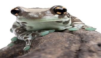 Perú: 64 especies de fauna están en peligro de extinción