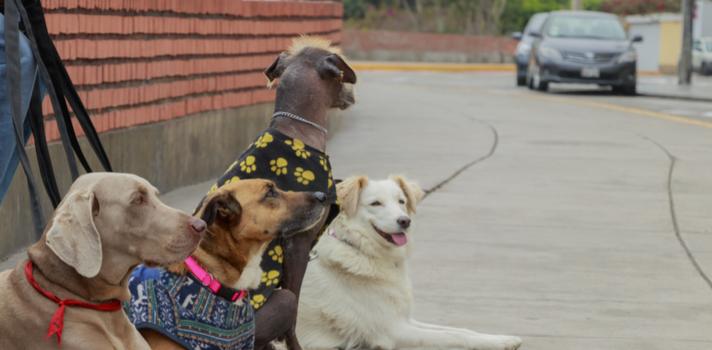 Pasear perros y ofrecer tu casa como un hotel para cuidarlos es una buena estrategia para sumar unos pesos en tu bolsillo