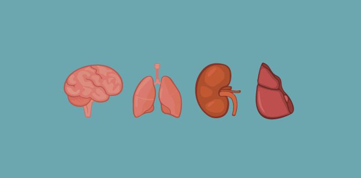 El diseño de órganos abre una nueva puerta para los pacientes a la espera de un trasplante