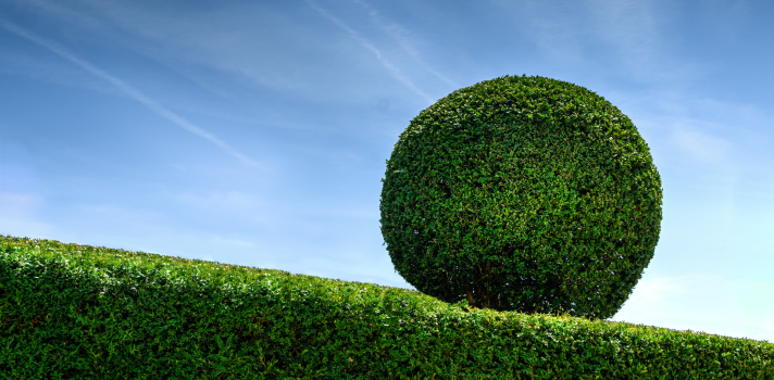 <p>¿Disfrutas del aire libre, la arquitectura y la jardinería? De ser así, la <a title=Universidad Torcuato Di Tella href=https://www.universia.com.ar/universidades/universidad-torcuato-di-tella/in/10166 target=_blank>Universidad Torcuato Di Tella</a> tiene una propuesta para ti. Se trata del <strong>Concurso Beca Paisaje 2016</strong>, una oportunidad para estudiar <strong>Arquitectura del Paisaje</strong> y obtener la exoneración total del pago de las cuotas de este programa.</p><blockquote style=text-align: center;><a id=REGISTRO_USUARIOS class=enlaces_med_registro_universia title=Regístrate en Universia aquí href=https://usuarios.universia.net/home.action target=_blank>Registrate</a>para estar informado sobre becas, ofertas de empleo, prácticas, Moocs, y mucho más</blockquote><p>La carrera de <strong>Arquitectura del Paisaje</strong>, coordinada por el arquitecto <strong>Juan Pablo Porta</strong>, tiene <strong>un año de duración</strong> y supone una cursada quincenal. Su propuesta es capacitar a los alumnos sobre la práctica profesional de la arquitectura del paisaje, con énfasis en el diseño, la infraestructura y el manejo sustentable. El programa está estructura en torno a dos grandes ejes temáticos: la construcción del paisaje urbano y la transformación del territorio.</p><p>Los solicitantes deberán presentar una carpeta formato A3 con un ejemplo representativo de su trabajo (extensión máxima 5 láminas) y otra carpeta formato A4 que contenga los siguientes documentos:</p><ul><li>Copia del título universitario</li><li>Fotocopia del DNI</li><li>Curriculum Vitae (extensión máxima 2 carillas)</li><li>Carta de motivación (extensión máxima 1 carilla)</li><li>Nombre y apellido de dos personas que puedan dar referencias sobre su desempeño</li></ul><p>Los documentos pueden enviarse a través del correo postal o entregarse personalmente en la dirección Av. Figueroa Alcorta 7350 (C1428BCW) antes del martes <strong>8 de marzo</strong>.</p><p>En el caso que estés interes