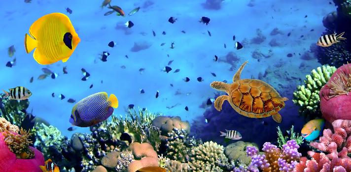 La acuicultura se presenta como el futuro inminente para el sector pesquero