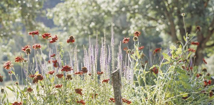 Consejos para poner freno a la alergia primaveral