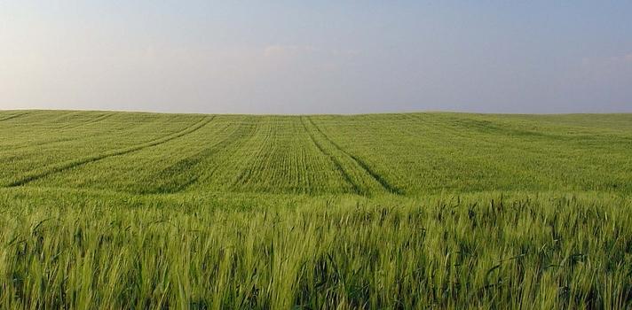 O cientista Agrário atua ensino e treina mão-de-obra para trabalhar em propriedades rurais e na agroindústria