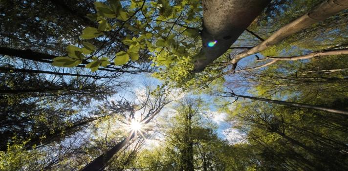 Respirar aire libre te ayudará a recargar energías