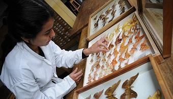 Docente de la UNAL asegura que el 80% de las colecciones biológicas no están sistematizadas